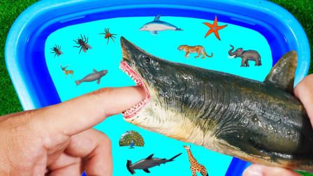 认识鲨鱼瓢虫蜘蛛等动物