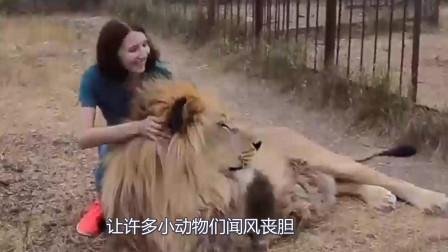 穿山甲误闯狮子地盘,狮群拿它没办法,还享受了一次免费SPA