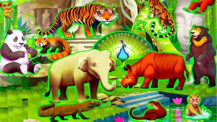 认识生活在丛林里的小动物们