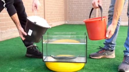 趣味科学实验,把鱼和可乐和1000个薄荷糖放在一起,会发生什么?