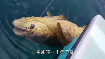 """国外男子用鸡海钓,不料大鱼挣脱钩子逃跑,真是""""丢了鸡跑了鱼"""""""