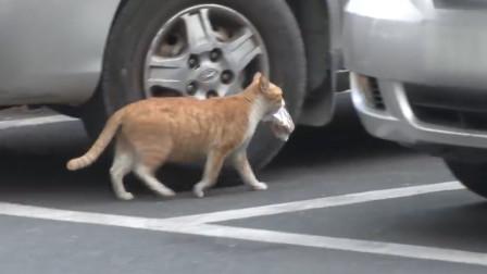 一只奇怪的流浪猫,只吃袋装食物,背后原因令人心酸!
