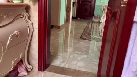 家里有一只布偶猫真好,上厕所没纸,叫一声就好了