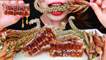 继多肉植物之后,又一种野草被端上餐桌,搭配蜂巢蜜吃的好香