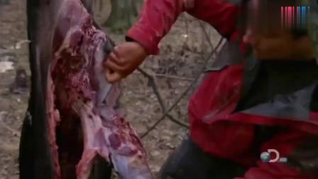 荒野求生:贝爷最丰盛的晚餐,烤一大块的野猪肉,够好几个人吃了