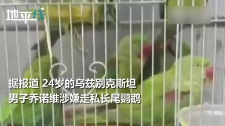 13只鹦鹉上印度法庭当证人 法官当庭向它们问话 鹦鹉们的反应亮了