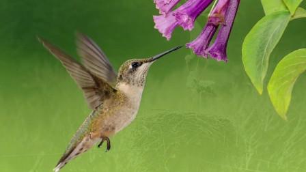 120分钟鸟语花香让你放松心情,沉浸自然!