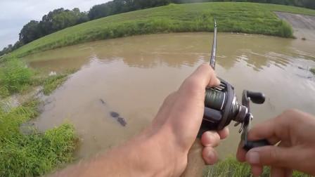 """钓到这种""""鱼"""",不敢取钩,只希望赶快断线跑鱼!"""