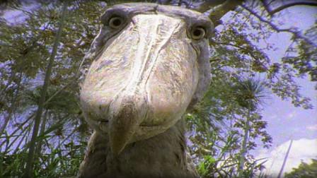 它是鳄鱼的头号敌人,饿了连同伴都不放过,见到人却鞠躬行礼