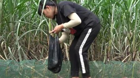 农村阿姨在河边下地笼,用特殊诱饵试试会能获多少野味