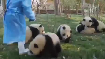 熊猫:澡堂生意爆棚,国宝排队搓澡