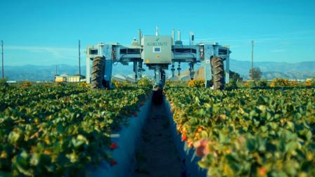 樱桃蓝莓葡萄草莓怎样采摘?看看德国机械化务农的先进技术吧!