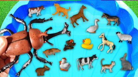 孩子们的早教启蒙课堂:学习认识昆虫和动物,蝗虫奶牛螳螂山羊公鸡!