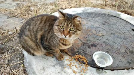 小区流浪猫生存状态调查,本喵是有品位的,不是想摸就能摸