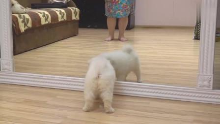 小狗第一次见到镜子里的自己,有爱的一幕