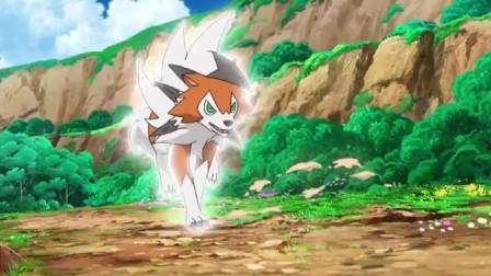 神奇宝贝:银伴战兽还真是强,鬃岩狼人使出冲岩都不是对手!