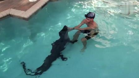 鳄鱼杀手!男子下水用此秘诀,3米巨鳄终被制伏
