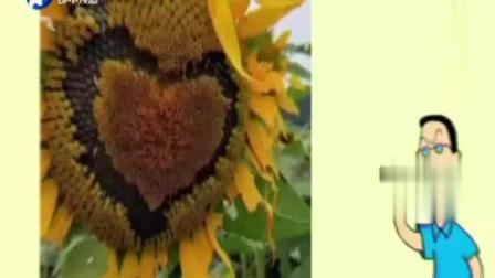 景区向日葵被扣成表情包,发朋友圈炫耀的难道是炫耀自己没素质?