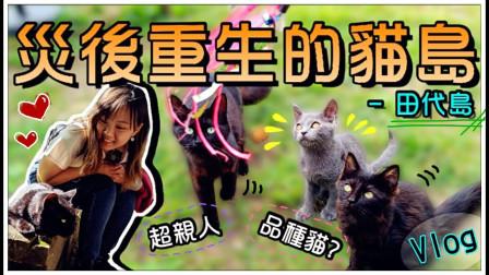 【鱼乾】灾后重生的猫岛 - 田代岛,猫咪都好亲人呀