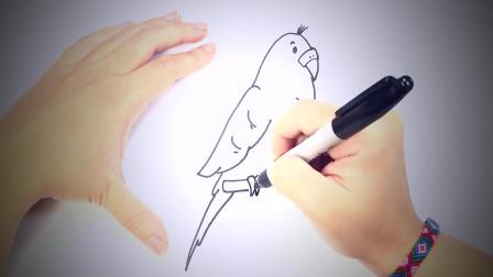 儿童简笔画:如何为孩子画长尾小鹦鹉_长尾小鹦鹉易画教程 简笔画教学视频