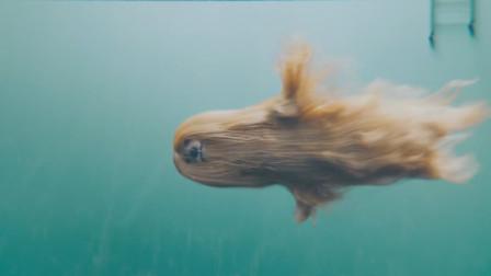 这可不是什么水怪在游泳,网友:别闹了,快把拖把捞起来