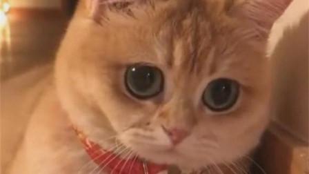 为什么这么多猫奴?看看它们有多可爱!
