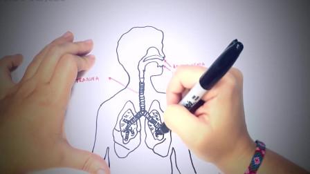 儿童简笔画:如何绘制呼吸系统步骤 简笔画教学视频