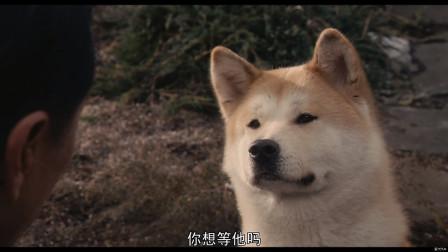 忠犬八公的故事(美版):一只感动了世界的秋田犬