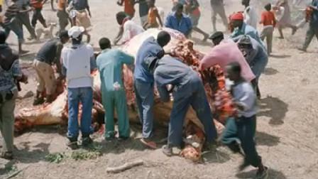 非洲人为何爱吃大象肉?真的因为好吃吗?真相让人心酸!