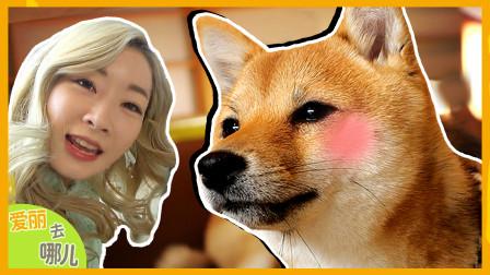 [爱丽去哪儿] 爱丽舍不得离开的地方是?探访日本柴犬主题乐园!| 爱丽去哪儿