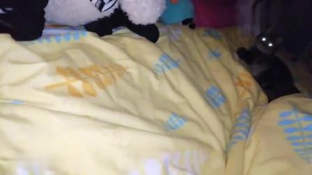 猫咪:来,过来吧,到点了该睡觉觉了