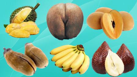 认识榴莲等6种美味水果,乐宝识水果
