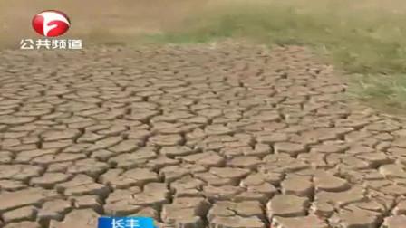 长丰:旱情严重 ,当家塘干涸水稻几乎绝收