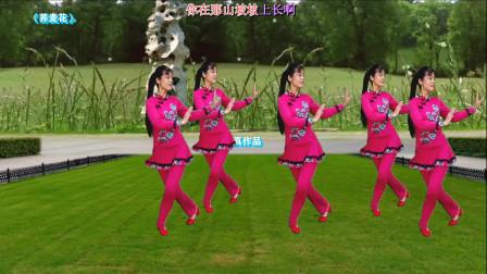 广场舞《荞麦花》优美秧歌舞步 演唱王二妮