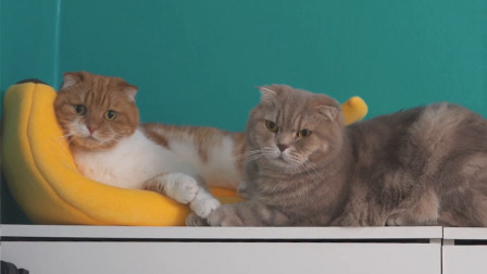 猫咪太胖不爱运动?用一个简单的小东西就能让它们动起来