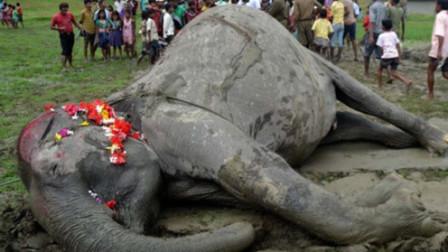 大象死后尸体不能碰?男子不听劝阻,不料下一秒意外发生!