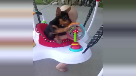 顽皮的小狗狗 可爱的小狗宝宝越小越萌