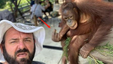 老外未给猩猩喂食就合影,却被猩猩竖中指,背后原因让人心寒