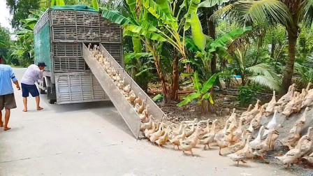 赶鸭子下车只需要一个阶梯,不跑也得跑