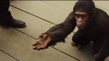 猩球崛起:凯撒小时候第一次做这个手语,男主都不知道什么意思