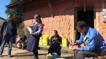 农村幺妈:六妈割红苕藤晒,叫上幺妈来帮忙,王平拿果子到地里解渴