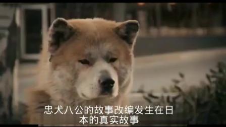 《忠犬八公的故事》: 豆瓣评分9.3,最感人的宠物电影,看一次哭一次
