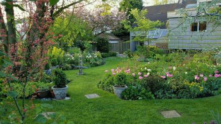 在房子的庭院里,一般种植什么树木比较好呢?今天算长见识了