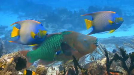如果把淡水鱼扔进海里,它们还能生存吗?看完涨见识了