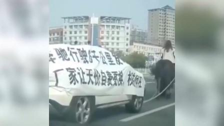 发动机炸了 山东一美女骑马拉个奔驰游街维权
