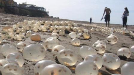 """沙滩""""巨型珍珠""""遭疯抢,渔民连忙阻止:赶快放下,这不是珍珠!"""