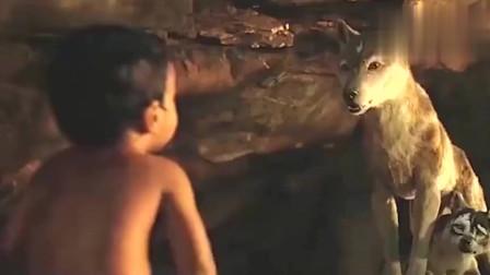 狼:本来想养大以后再吃,结果他长大后打不过了