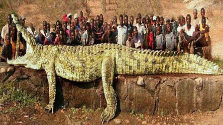 5只历史上最危险的动物