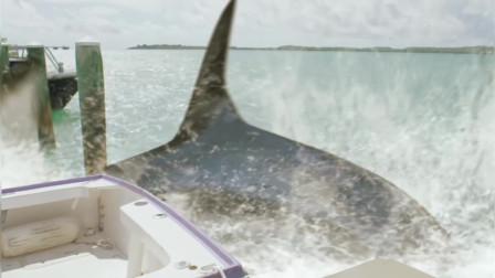 夺命五头鲨:血腥的一幕:用手枪射鲨鱼,瞬间被鲨鱼吃掉