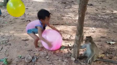 猴子抢走小孩手上的气球,当气球爆掉的那一刻,猴子反应太搞笑了